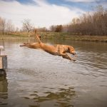 life afield, sporting lifestyle, hunting dog stock photography