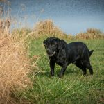 sporting dog, gun dog, hunting dog, dog photographer