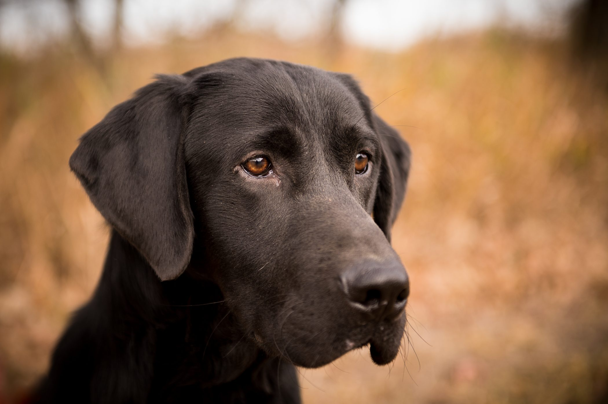 Life Afield Hunting Preserve Photography Sporting Dog